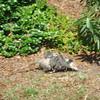 Possum on the move