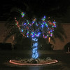 2016-12-13 - Lighted Palm