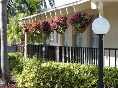 Flowers on club house