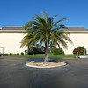 Palm at turning circle between buildings 5 & 6