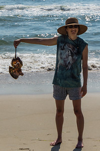 Daphne with Horseshoe Crab Shell
