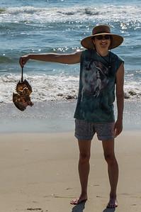 Daphne with Horseshoe Crab Shell
