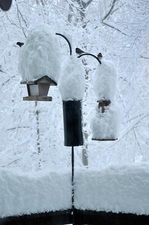 Virginia Blizzard of 2010