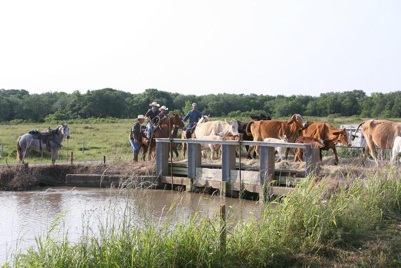 CattleCrossingCanalMMW5085