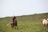 CowboyChasingCowMMW5083