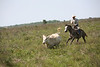 CowboyChasingCowMMW5086