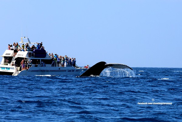 WHALE WATCH FEBRUARY 2015