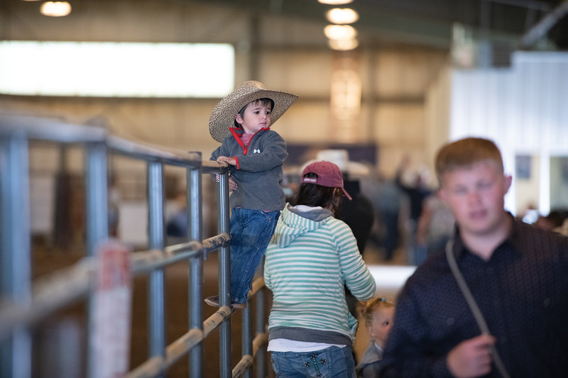 Matthew Gaston | The Sheridan Press<br>Two-year-old Eli Ruby gets a birds eye view from atop the fence at the WYJRA Rodeo Saturday, June 22, 2019.