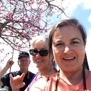 Waimea Cherry Blossom Festival - Feb 2015