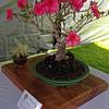 2015 Waimea Cherry Blossom Festival