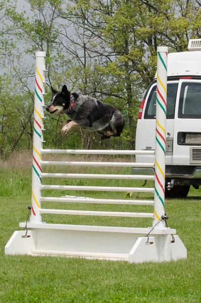 R & R Pet Paradise Dog Sports Team - Walk & Wag 2015