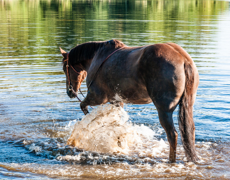 His favorite activity!<br /> Lead a horse to water.. and he splashes!