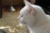 Original photo of Mizu, one of Sam and Connie's cats