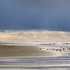 0425_beachgullsHDRx