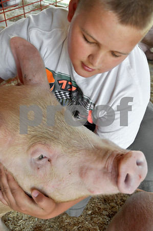 -Messenger photo by Emilie Nelson <br /> <br /> Collin Harris, a member of the Washington Winners 4-H Club gives one of his pigs a little love as he prepares for the swine show Thursday afternoon at the Webster County Fair.
