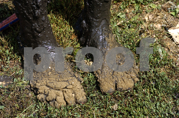 -Messenger photo by Hans Madsen<br /> <br /> This is not a pair of dirt clods or some sort of alien life form - it is in fact Alison Nagel's feet covered with mud and dry dirt that stuck to them after she got out of the mud volleyball pit and the Webster County Fair Saturday morning.