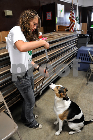 -Messenger photo by Joe Sutter<br /> <br /> Sadie Lewman, of Independent 4-H group, demonstrates how to put a leader collar on her dog Quinn. You have to make sure the chain is shaped like a 'p' and not a 'q', she said, or it won't release properly. Lewman competed in the sub-novice category.