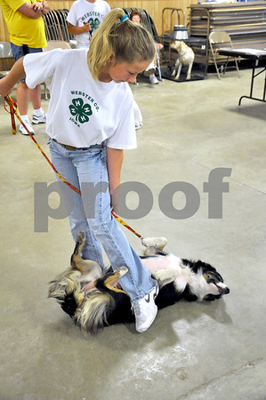 "-Messenger photo by Joe Sutter<br /> <br /> Jazzy gets comfortable while waiting with Josie Schild for their turn in the Webster County Fair Dog Show obedience category. Schild is a member of the Nifty Newark 4-H group, and competed in the pre-novice ""A"" class."