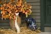 Here's my fall tribute at the front door.  The leaves were from my hardy eucalyptus