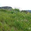 pretty meadow across from the rock