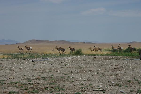 West Desert 7/9/17