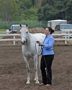 Horses on Halter Any breed - Open