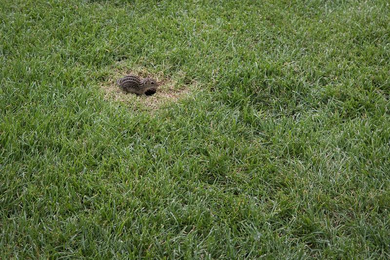 Some sort of ground animal
