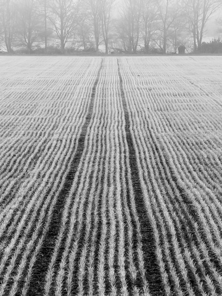 Frosty field on a misty morning