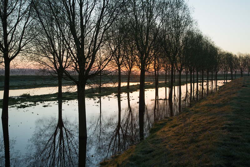 19 April 2016: Flooded willows along the River Great Ouse at Queenholme, Cambirdgeshire