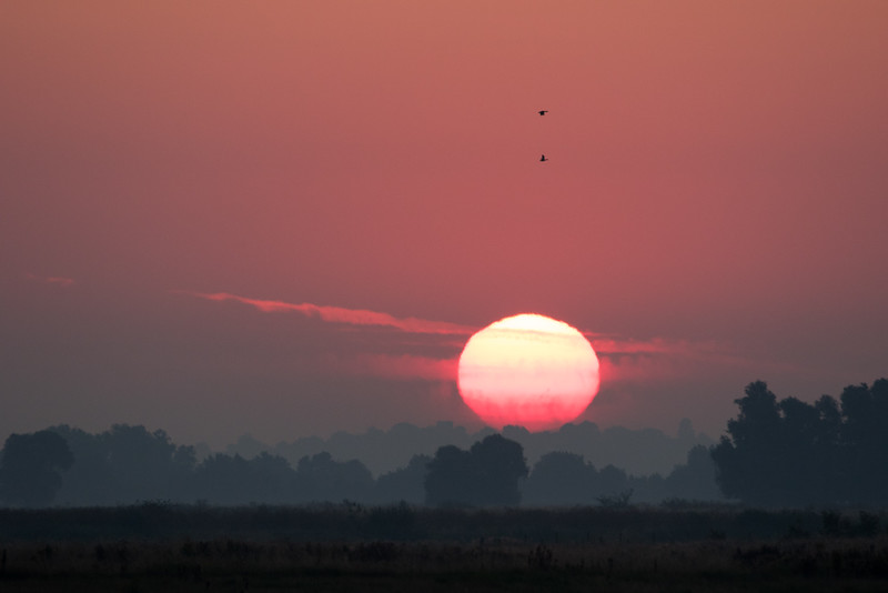 25 August 2015 - Last Sundays sunrise over Hansen RSPB Reserve, Over, Cambridge