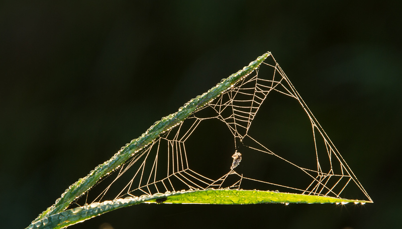 19 September 2015 - spiderweb and dewdrops on The Causeway, Nr Willingham