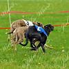 #3 Saphira, #2 Truman, middle dog Fu