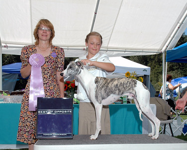 AKC Dog Shows