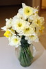 7_daffodil_041017
