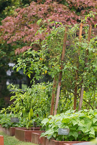 Photo from the White House Kitchen Garden  - October 2012
