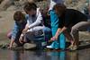 White Sturgeon Release
