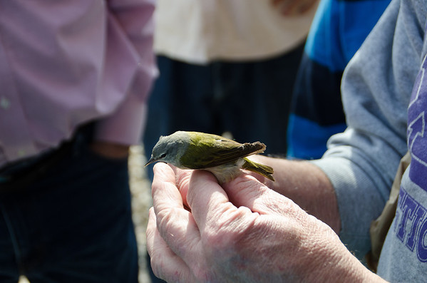 Wickiup Hill Learning Center Bird taging