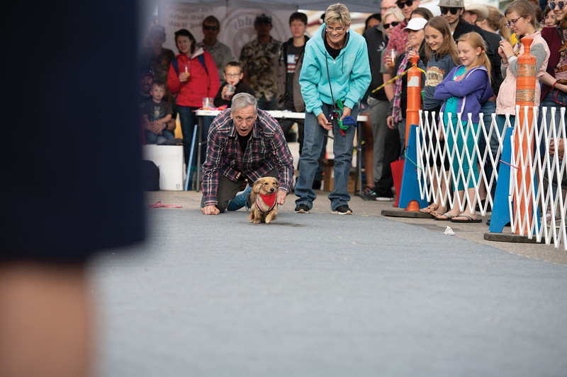 Matthew Gaston | The Sheridan Press<br>Clara started out slow but with encouragement from her human she was able to take home a win in the bean weeny division during the wiener dog races at Blacktooth Brewing Tuesday, June 11, 2019.