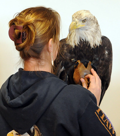 "Lori Turney, of Hawk Quest of Colorado, holds a female bald eagle that was rescued in Alaska.<br /> The Wild Bear Mountain Ecology Center in Nederland celebrated Earth Day with live animals, activities, speakers, among other things on Sunday. For a video and more photos of Wild Bear, got to  <a href=""http://www.dailycamera.com"">http://www.dailycamera.com</a>.<br /> Cliff Grassmick / April 22, 2012"
