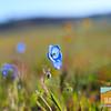 Wildflowering_008