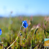 Wildflowering_013