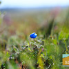Wildflowering_005