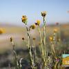 Wildflowering_002