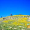Wildflowering_017
