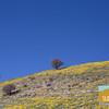 Wildflowering_015