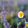 Wildflowering_009