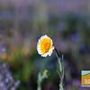 Wildflowering_010