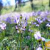 Wildflowering_018