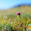 Wildflowering_011