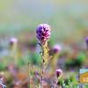 Wildflowering_003